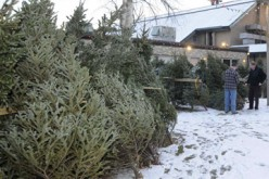 Youth group sells Christmas trees