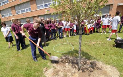 treeplanting-web