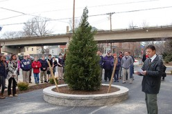 Tree in memory of former student