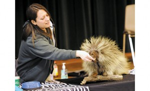 Nicole Goodsell of the Philadelphia Zoo feeds a North American porcupine, and holds a boa constrictor, during a presentation at St. Peter School, Merchantville, on Feb. 3. She also brought a rabbit and a hawk for her presentation. Photos by Alan M. Dumoff