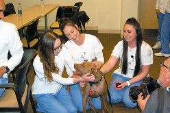 Stress relief on four legs visits nursing students