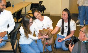 Aladdin, a certified therapy dog, laps up the attention from students during a visit to Our Lady of Lourdes Nursing School, Camden on April 21. Once a shelter dog that had been severely abused, the pitbull's legs easily tire, so he got his own wheelchair for part of the visit (shown in photo below). Photos by James A. McBride