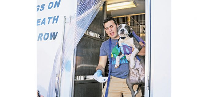 Canine caravan