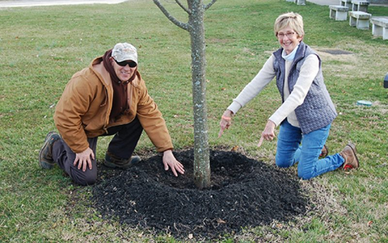 The job of keeping trees healthy in the cemetery